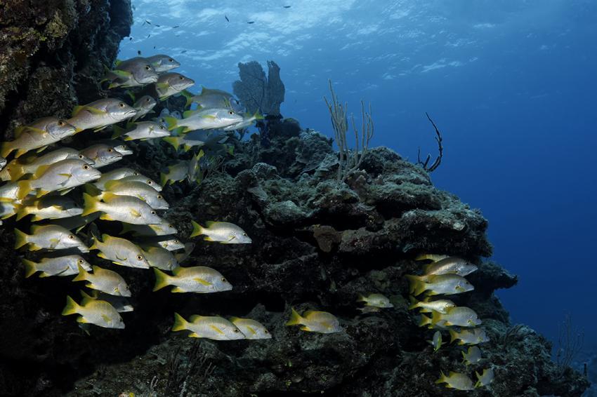 Aqua Cat, Bahamas