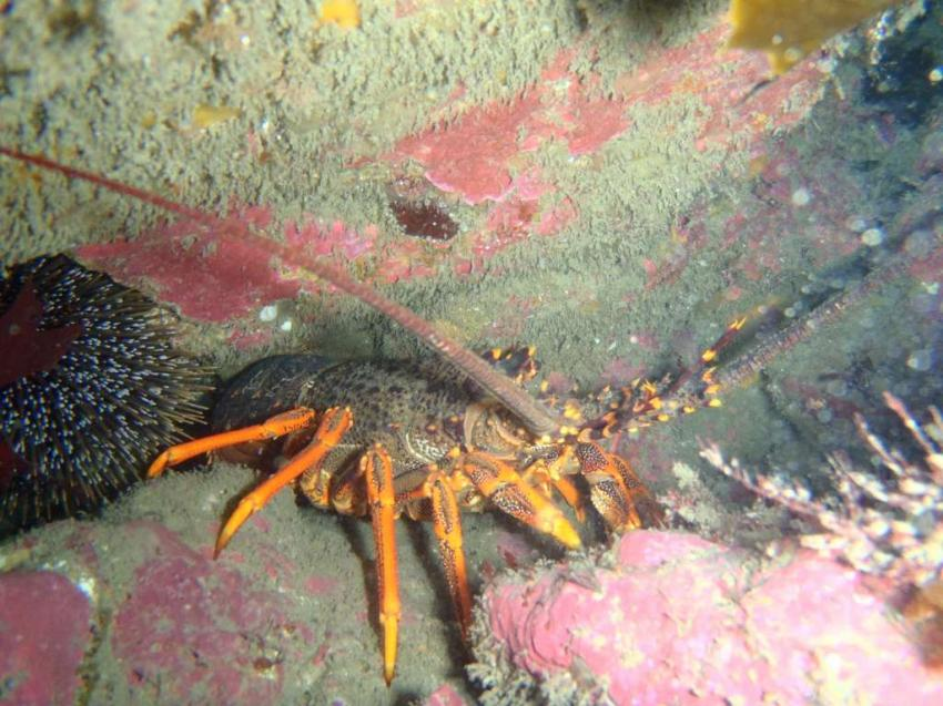 Dive HQ Wellington, Taputeranga Marine Reserve, Wellington, New Zealand 2016, Dive HQ Wellington, Taputeranga Marine Reserve, Wellington, New Zealand 2016, Dive HQ Wellington (Lower Hutt), Neuseeland