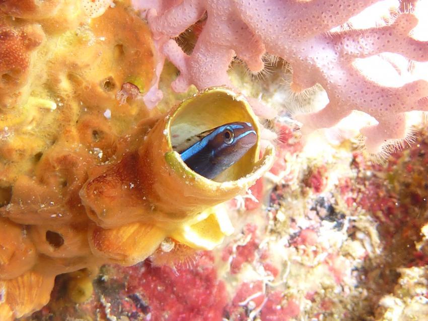 Extra Divers Mirbat, Oman, Oman