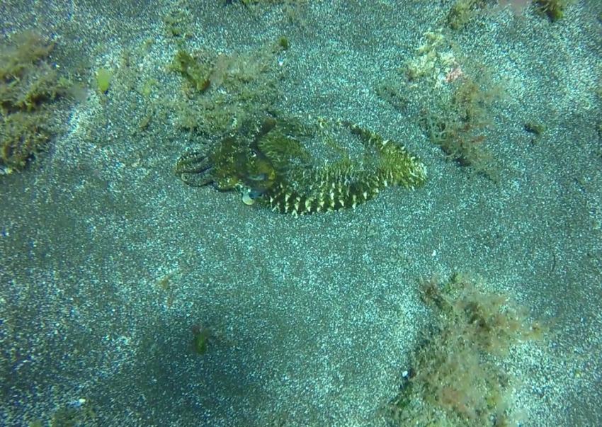 Extra Divers - El Hierro, Spanien, Kanaren (Kanarische Inseln)