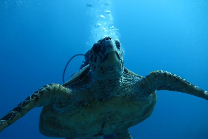 Scuba World Divers Soma Bay_13, Tauchen Ägypten Soma Bay, Scuba World Divers Soma Bay, Caribbean World Resort, Ägypten, Safaga