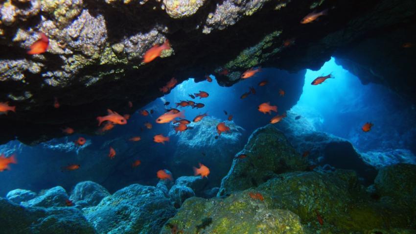 Riesenhöhle, Höhle, Daivoon Dive Center, Lanzarote, Costa Teguise, Spanien, Kanarische Inseln