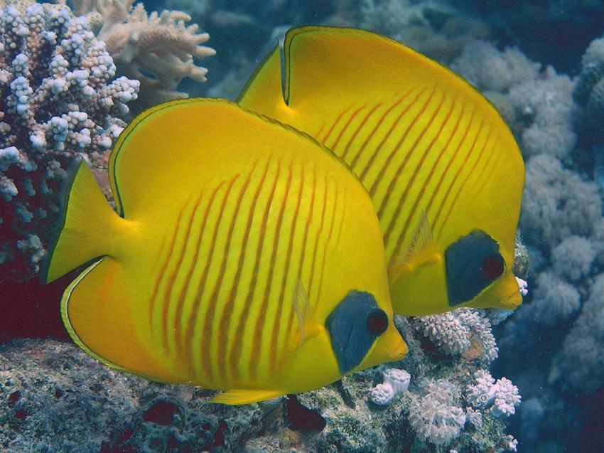 Scuba World Divers Soma Bay_2, Tauchen Ägypten Soma Bay, Scuba World Divers Soma Bay, Caribbean World Resort, Ägypten, Safaga