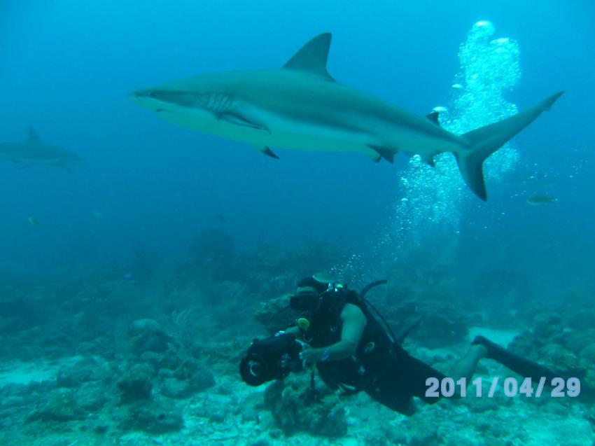 Taucher fotografiert Hai