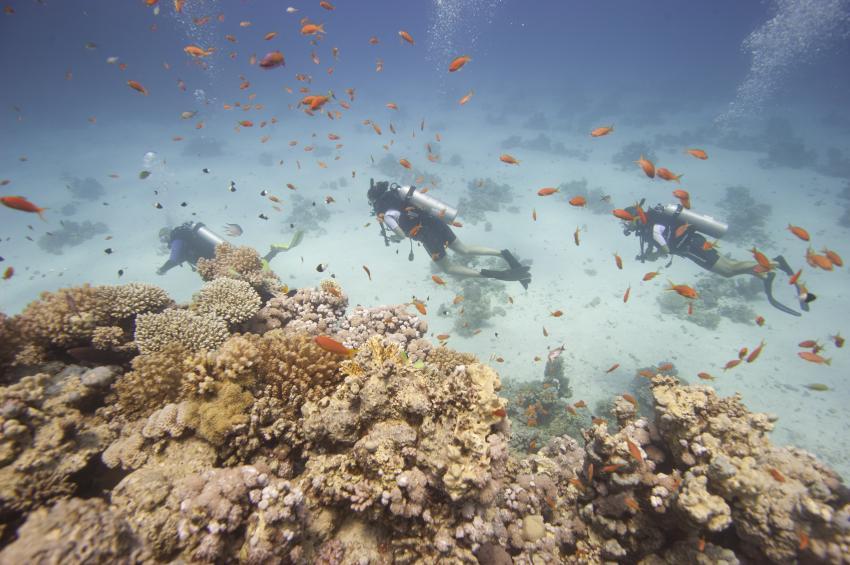 Scuba_World_Divers_Soma_Bay_3, Tauchen_in_Soma_Bay, Scuba World Divers Soma Bay, Caribbean World Resort, Ägypten, Safaga