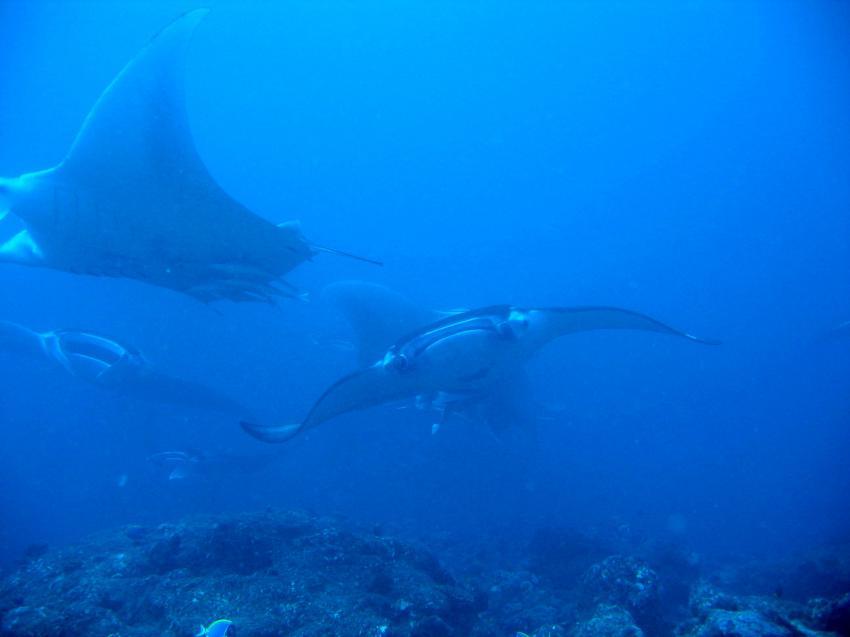 Donkalo Thila (Ari Atoll), Donkalo Thila,Ari Atoll,Malediven