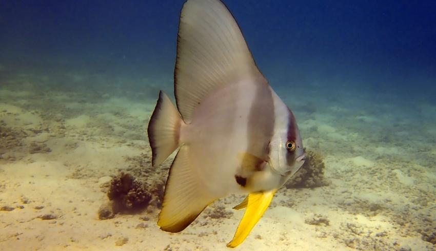 Jasmin Diving
