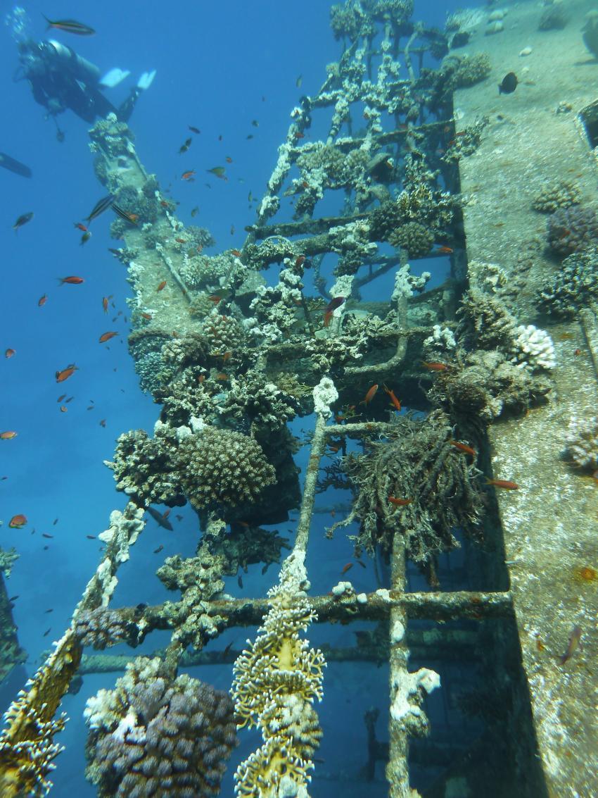 Hausriff und Tobia-Reef, Safaga Magic Divers,Ägypten,Wrack,Aufbauten,Oberdeck