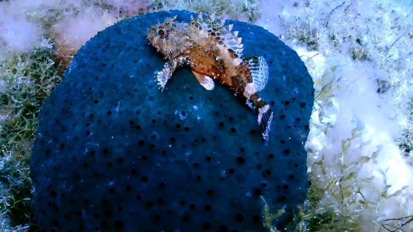 Patris reef