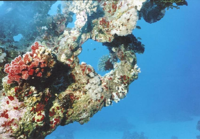 Wrack der Thistlegorm, Wrack der SS Thistlegorm (Sharm El Sheikh),Ägypten