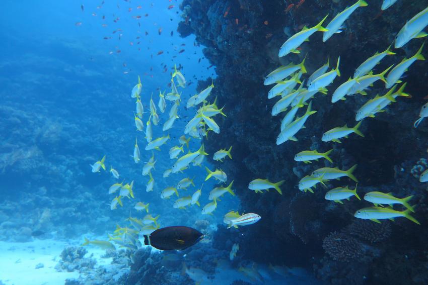 Scuba World Divers Soma Bay_12, Tauchen Ägypten Soma Bay, Scuba World Divers Soma Bay, Caribbean World Resort, Ägypten, Safaga
