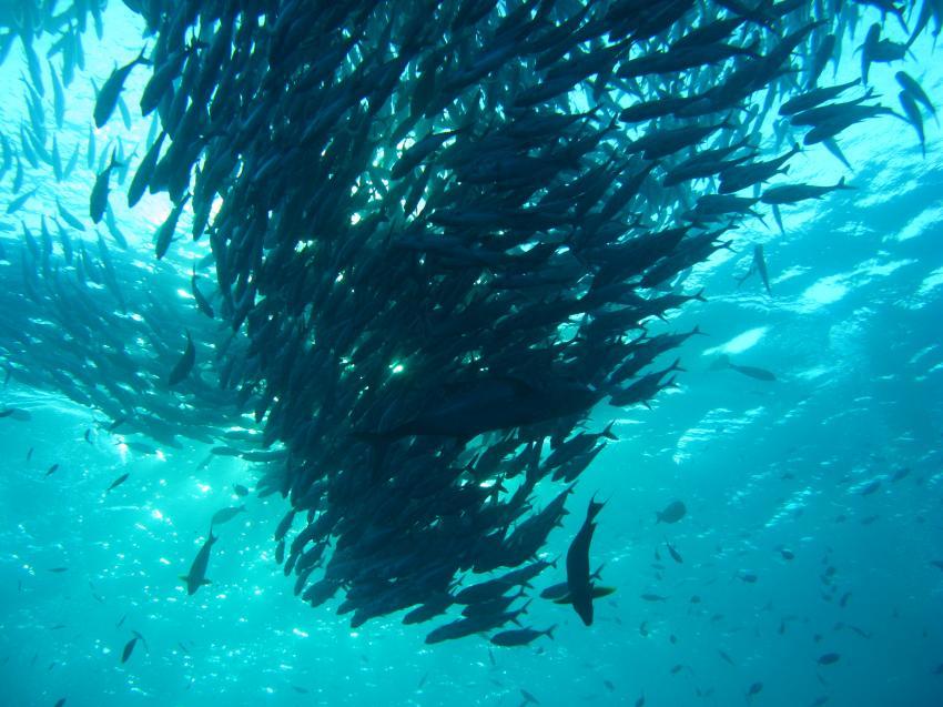 Joes Diving Bali - Die Tauchburg