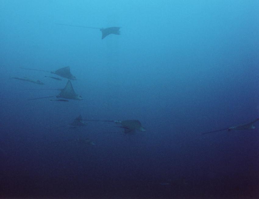 Insel Mahé, Mahé,Seychellen