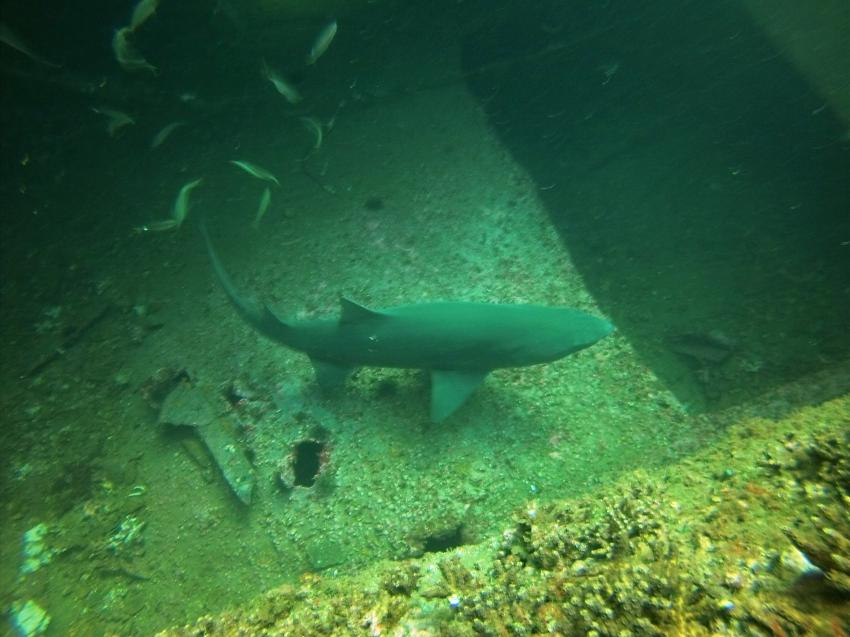 Olympus Dive Center, USA, North Carolina