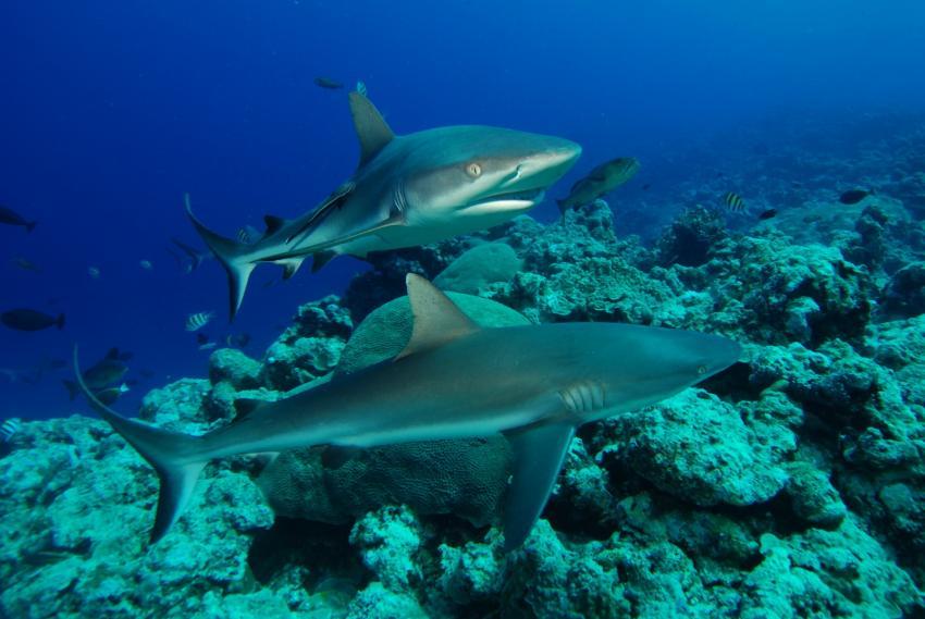 Yap (Unterwasser), Yap allgemein,Yap,Mikronesien