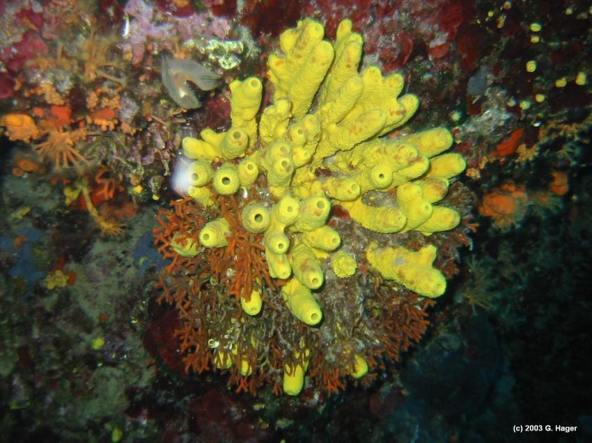Insel Korcula, Korcula,Kroatien,Schwamm,Höhle,gelb,Bewuchs