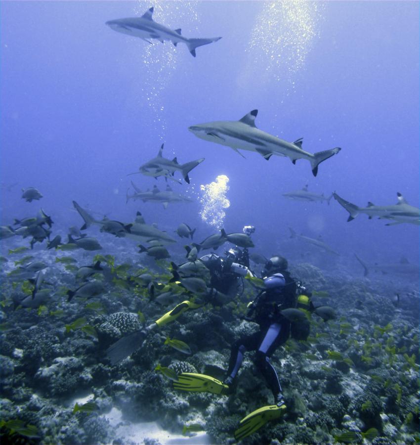 Moorea, Moorea und Fakarava,Französisch-Polynesien,Haie,Taucherohne Rücksicht aufs Riff,Riffzerstörung von Tauchern