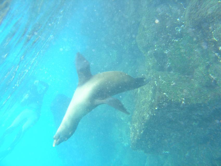 Galapagos, Galapagos Allgemein,Galapagos,Ecuador