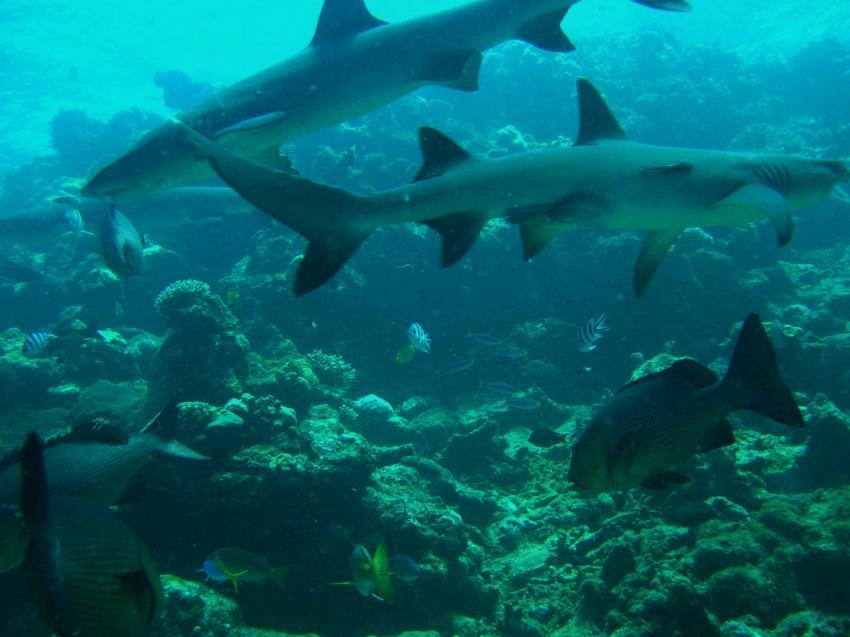 Beqa Lagoon Vitu Levu (Fiji), Beqa Lagoon,Fidschi