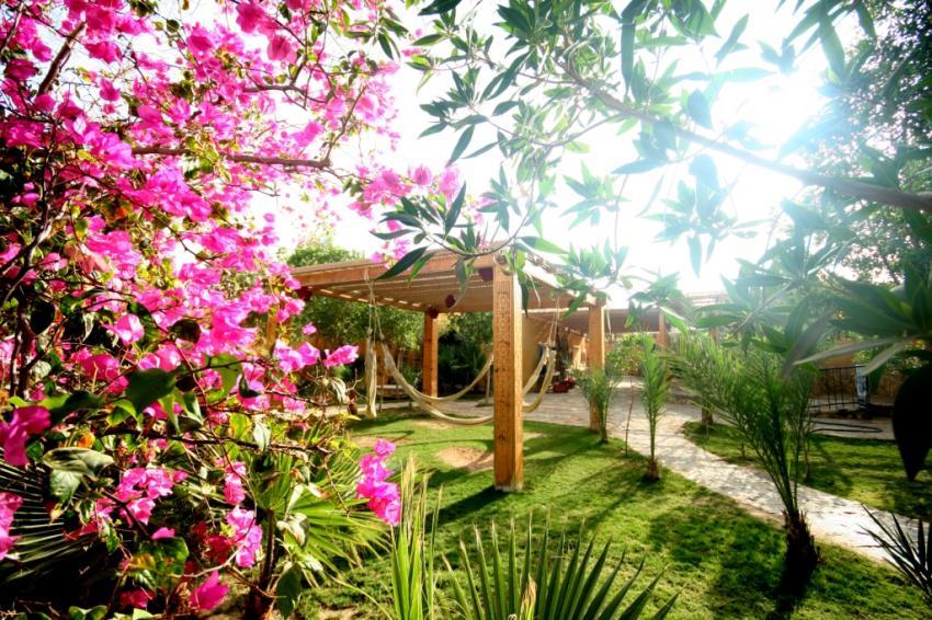 Gärten bei Dive Urge. Gardens at Dive Urge , Dive Urge Dive Resort, Dahab, Ägypten, Sinai-Nord ab Dahab