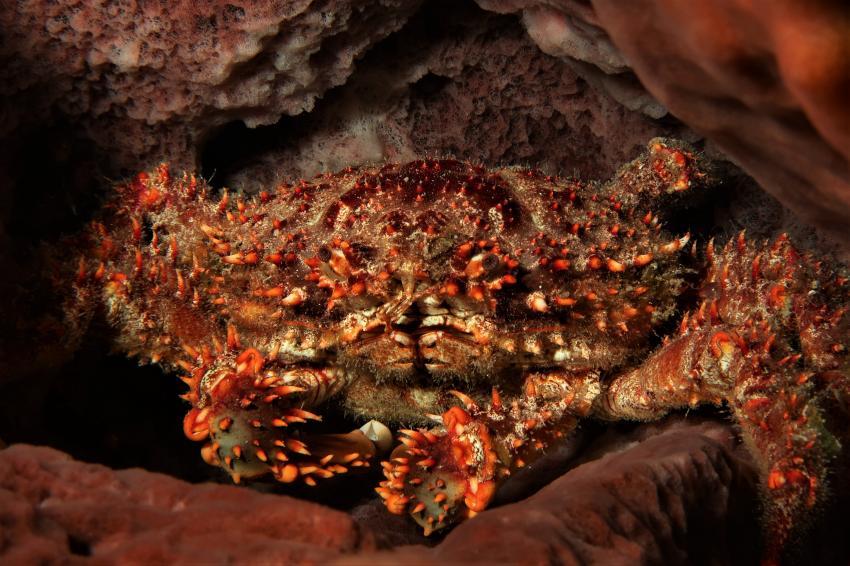 Krabbe im Schwamm