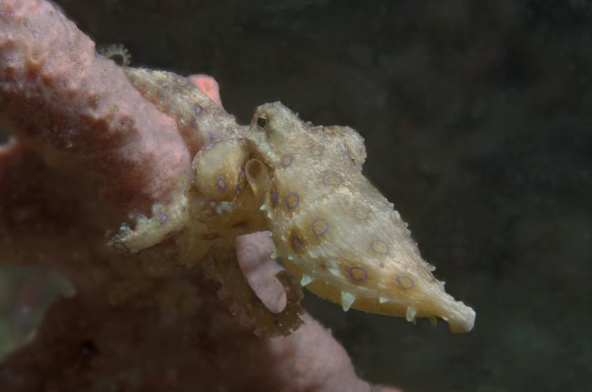 Lembeh Strait Juli 2013, Basis Black Sand Dive Retreat