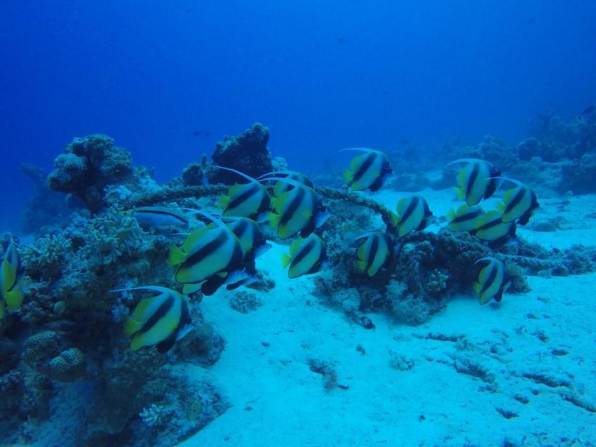 Egypt International Diving Center, Dana Beach Resort, Ägypten, Hurghada
