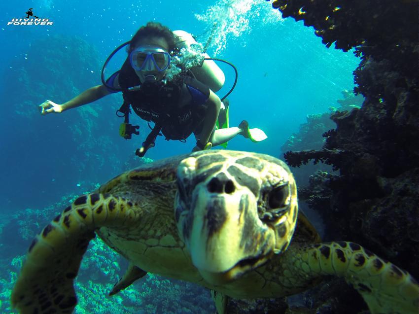 Tauchen in Hurghada , Tauchen in Hurghada, Diving Forever Hurghada, Ägypten, Hurghada