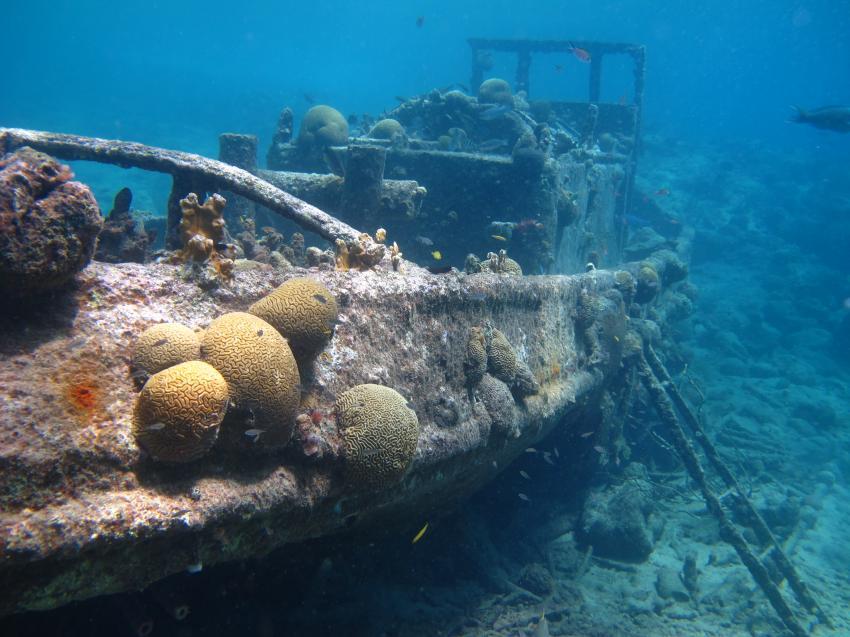 Curacaoing, Tugboot-Caracas Baai,Curaçao,Niederländische Antillen,Wrack,bewachsen,Korallen