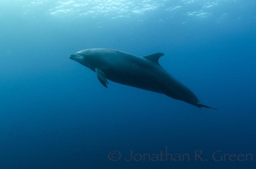 Delfine verzaubern unseren Sicherheitsstop in ein aufregendes Abenteuer