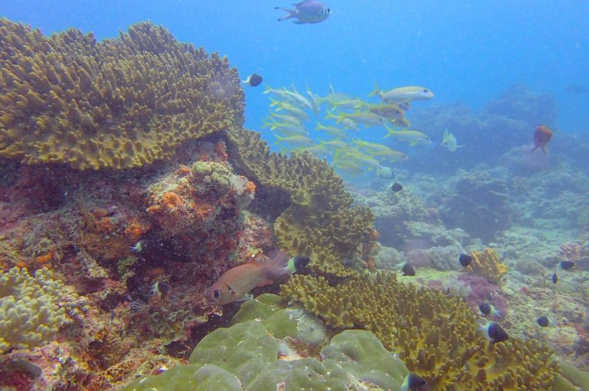 Diving Poseidon, Nungwi - Sansibar, Tansania