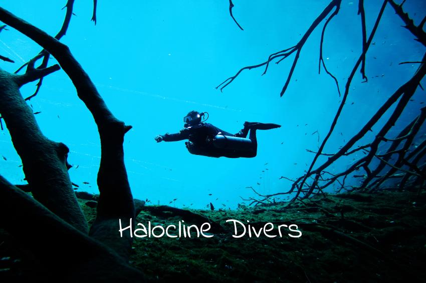 Halocline Divers, Mexiko