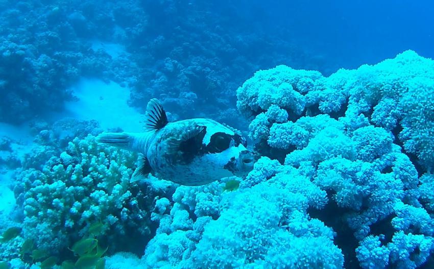 Extra Divers - Ghalib, Port Ghalib , Ägypten, El Quseir bis Port Ghalib