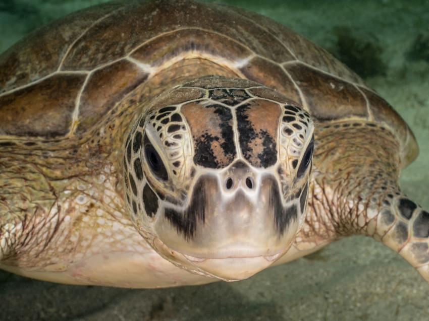 Schildkröte in der Bucht