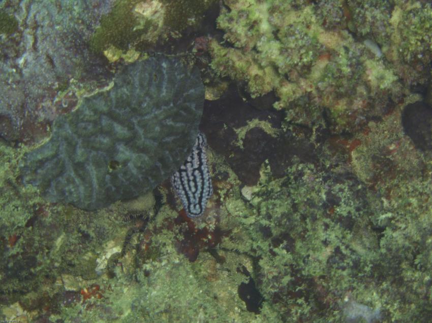 Nyali / Shanzuriff, Nyali,Shanzu-Riff,Kenia