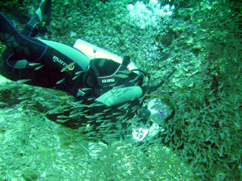Mahé - Conception Island drift dive, Mahe,Beau Vallon,Conception Rocks,Seychellen