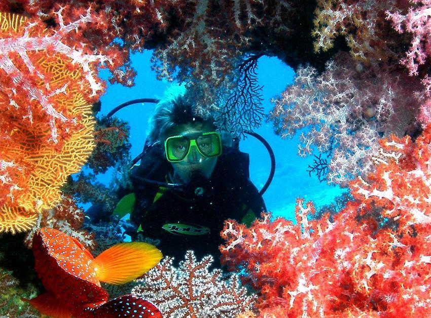 Richelieu Rock, Richelieu Rock,Thailand,Taucherin,Porträt,Anemone,Korallen,Erg
