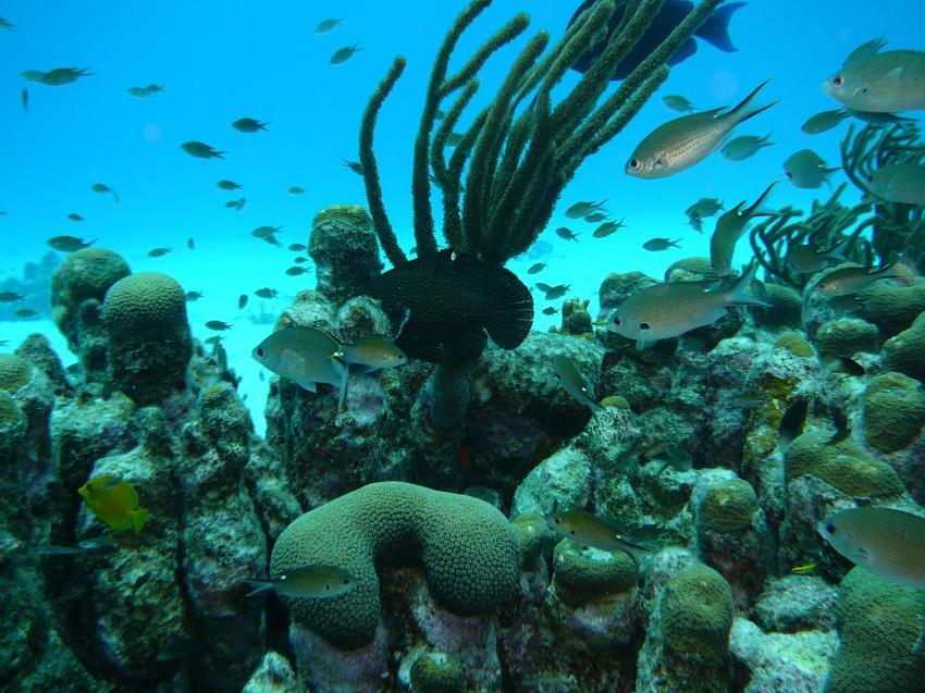 Bonaire, Bonaire,Niederländische Antillen,riff,karibik,schwämme
