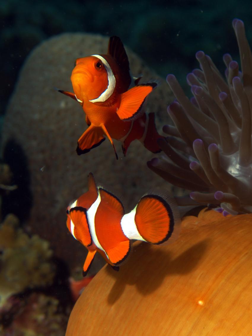 Hambillica, House Reef