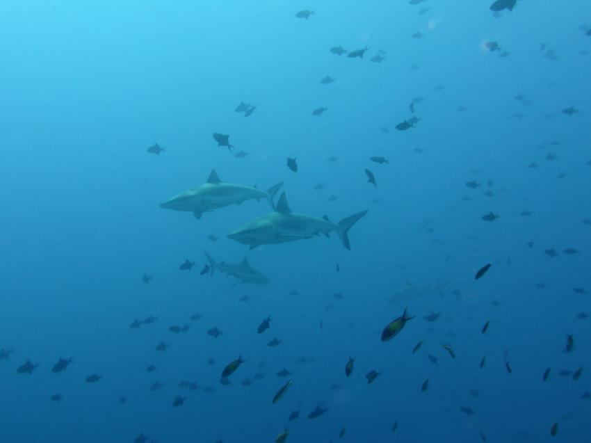 "Madivari ""Hai""-Lights, Dive Shack, Rasdhoo, Nord Ari Atoll, Malediven"