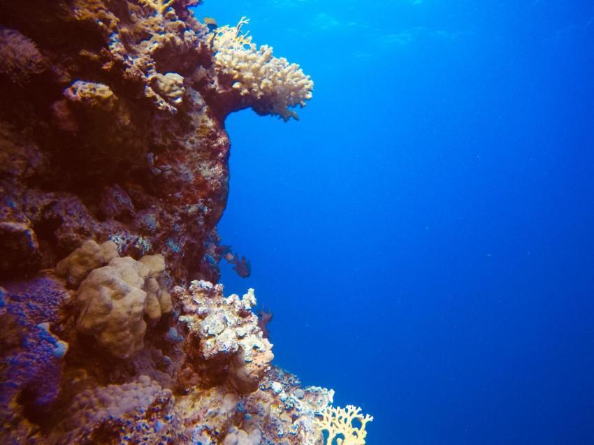 Scuba World Divers SuneoClub Reef Marsa?Hausriff, Tauchen Ägypten Marsa Alam Port Ghalib, Scuba World Divers, SuneoClub Reef Marsa, Port Ghalib, Ägypten, El Quseir bis Port Ghalib