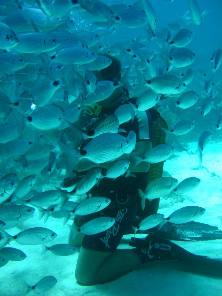 Lantern Point und Umgebung (Cirkewwa), Lantern Point,Malta,Taucher,Schwarm Fische
