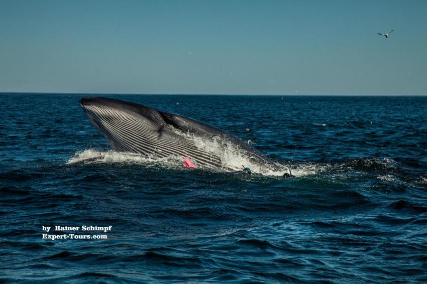 Dive Expert-Tours,  Port Elizabeth, Südafrika
