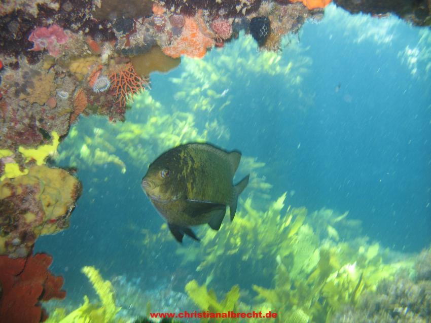Rottnest Island, WA, Rottnest Island,WA,Australien