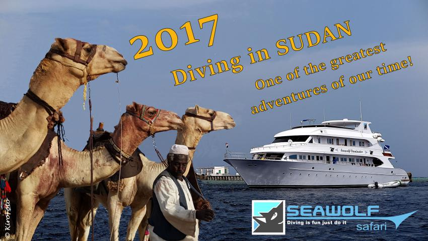 Sudan 2017, Seawolf Diving  Safari Sudan, M/Y Seawolf Dominator (Sudan), Sudan