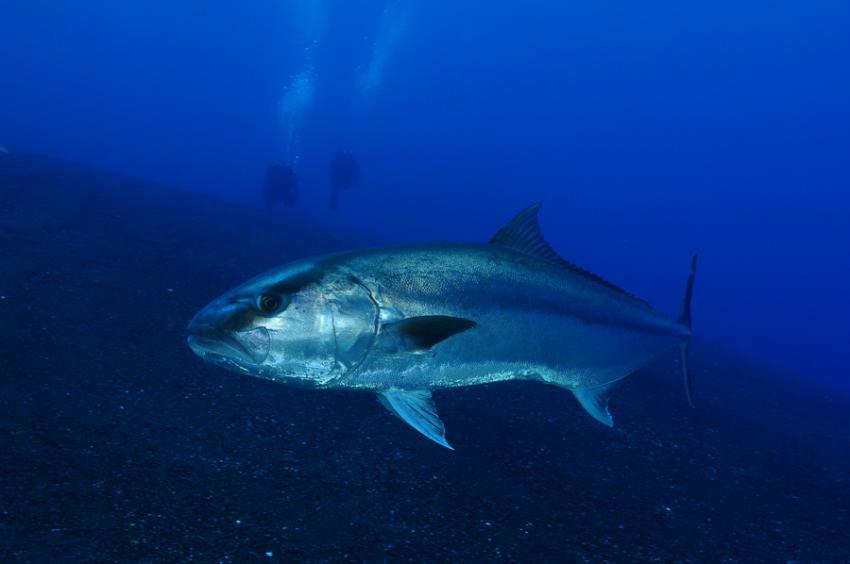 Extra Divers El Hierro, Spanien, Kanarische Inseln