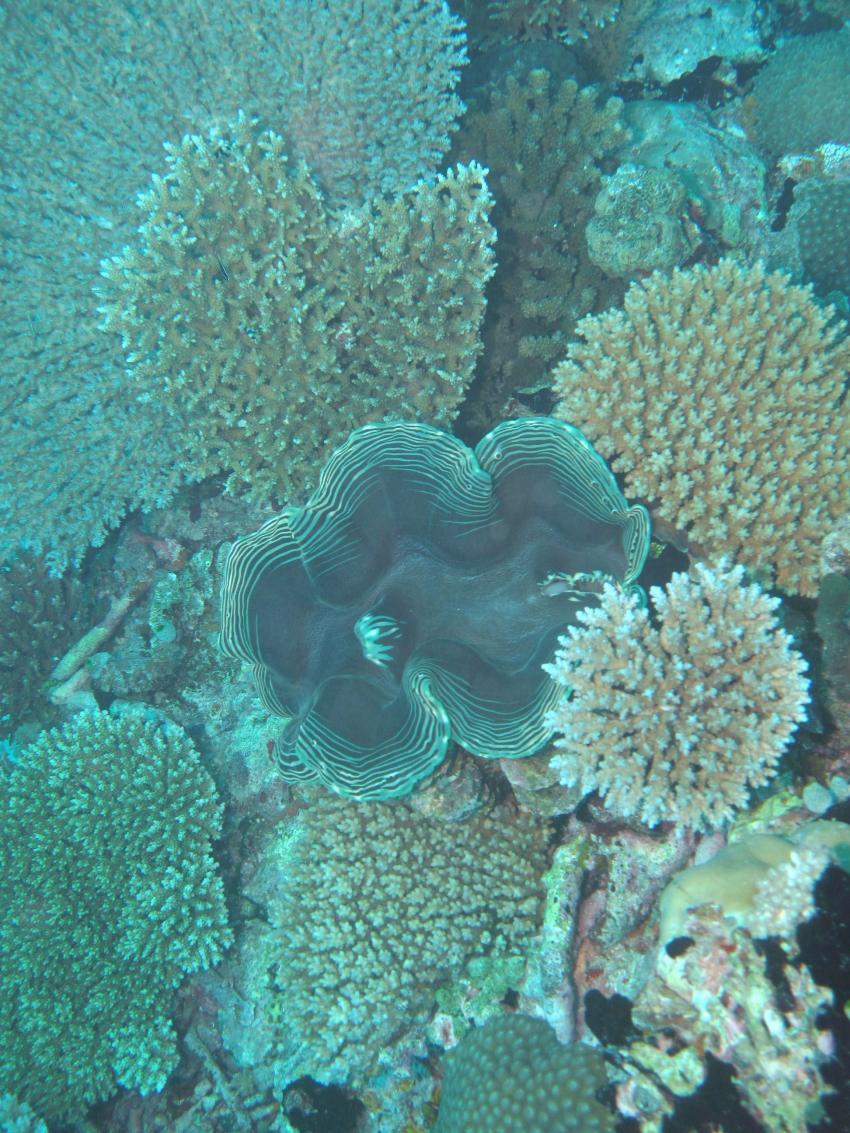Medhufushi Aussenriff, Medhufushi,Malediven