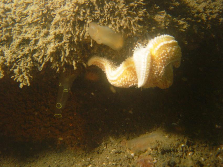 Grevelinger Meer / Den Osse, Den Osse,Grevelinger Meer,Niederlande