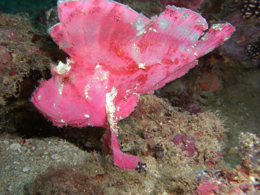 tauchen im unterwassernationalpark watamu