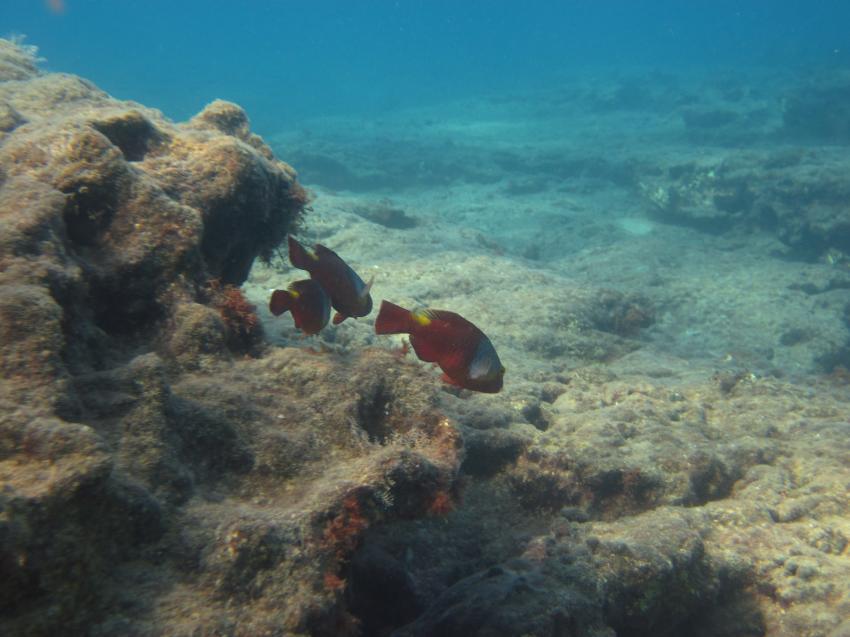 fish, karaburun   okurcalar     alanya,Türkei